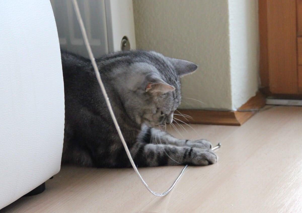Wenn Katzen spielen - der Spieltrieb der Katzen