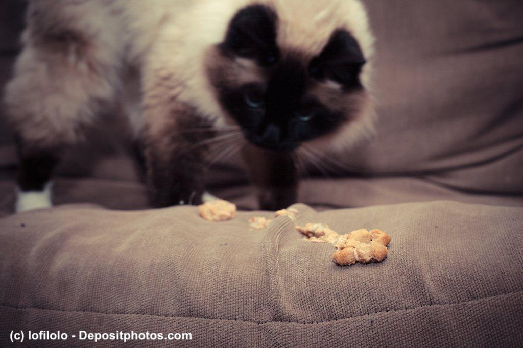 Katze erbricht auf Couch
