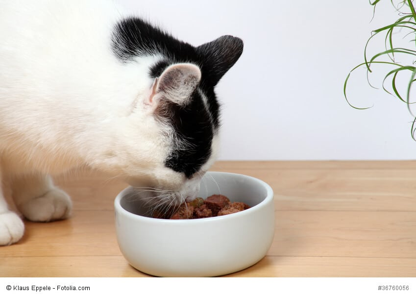 Eine Katze hockt vor ihrem Napf und frisst