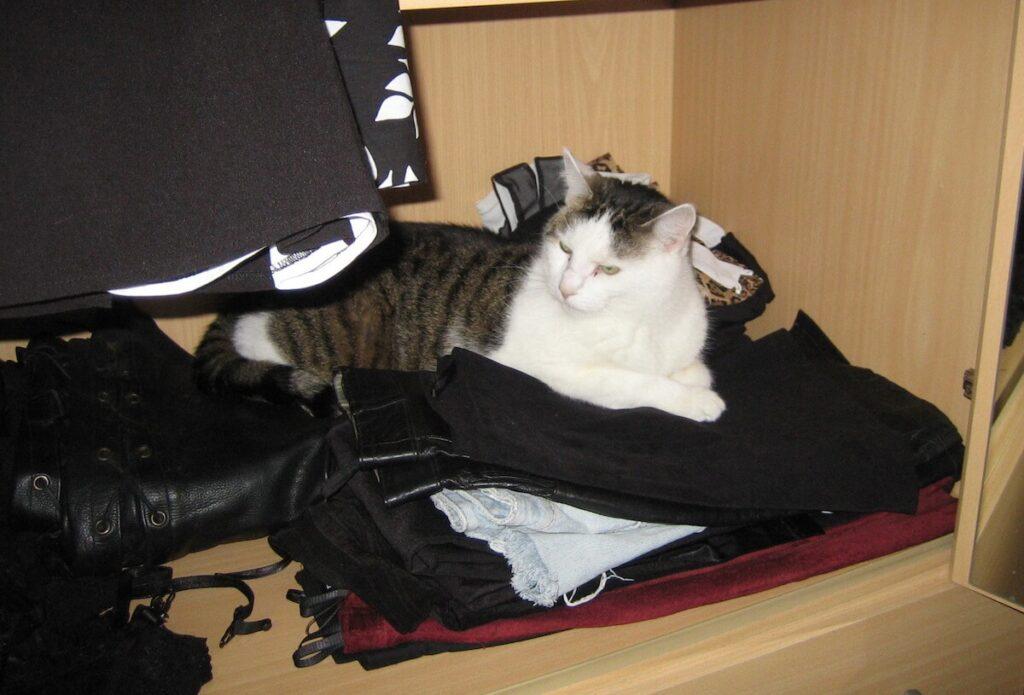 Eine Katze liegt auf der Wäsche im Kleiderschrank.