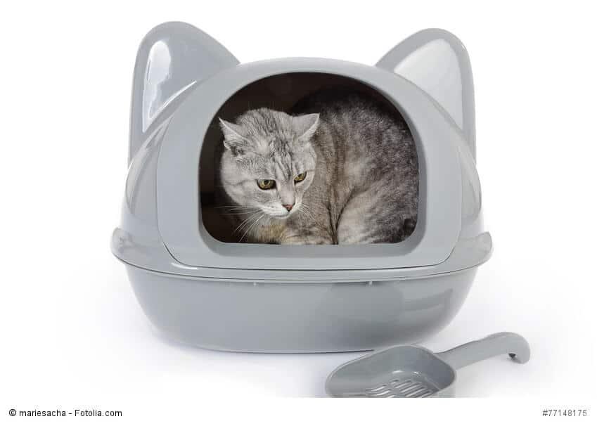 Katze in einem Katzenklo mit Ohren