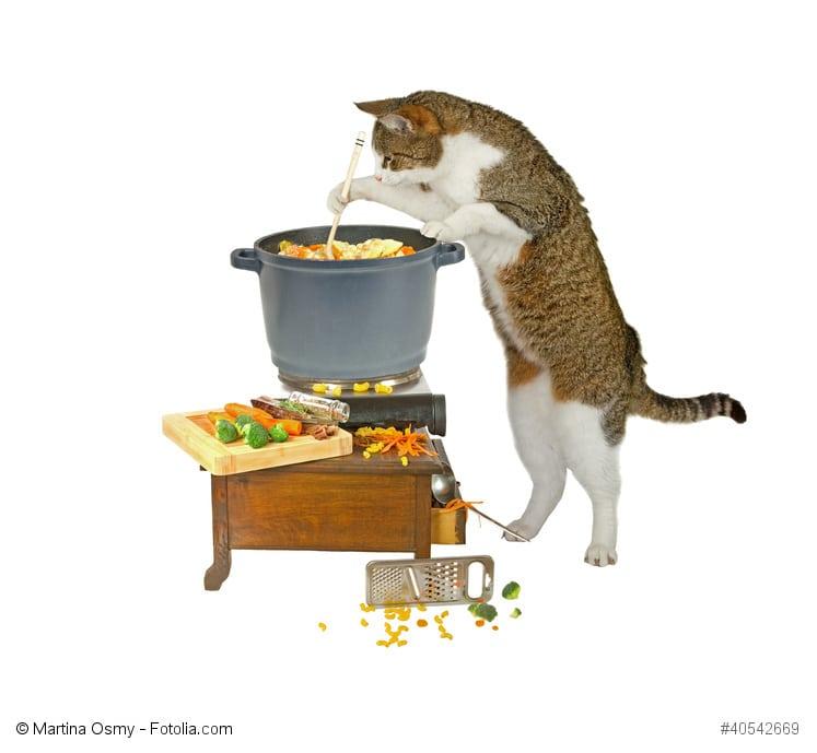 Eine Katze steht an einem Topf und rührt um