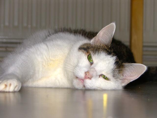 Katze liegt entspannt auf der Seite auf dem Boden