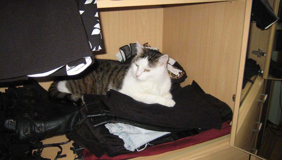 Katze liegt im Schrank