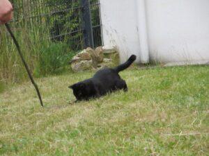 Fellfarbe Katze schwarz spielt im Garten