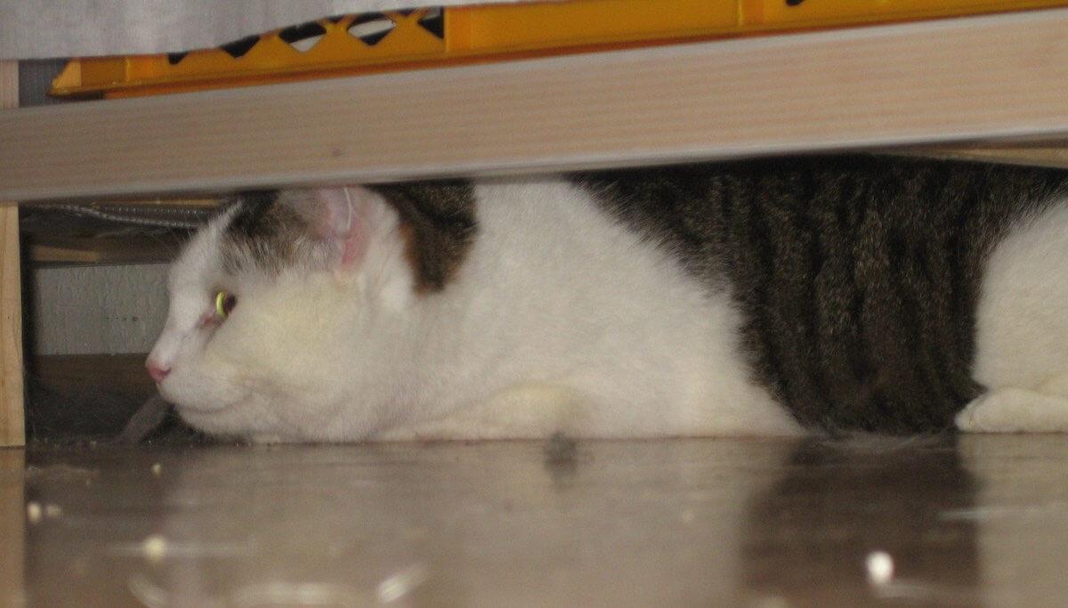 Katze versteckt sich unter einem Schrank
