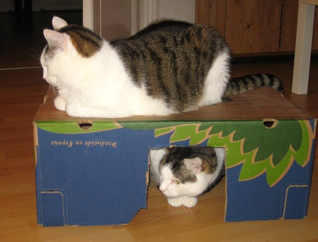 Zwei Katzen sitzen in und auf einer Bananenkiste