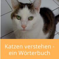katzen-verstehen