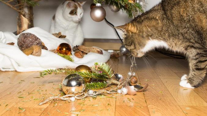 Zwei Katzen beäugen zerbrochene Weihnachtskugeln unter einem Weihnachtsbaum