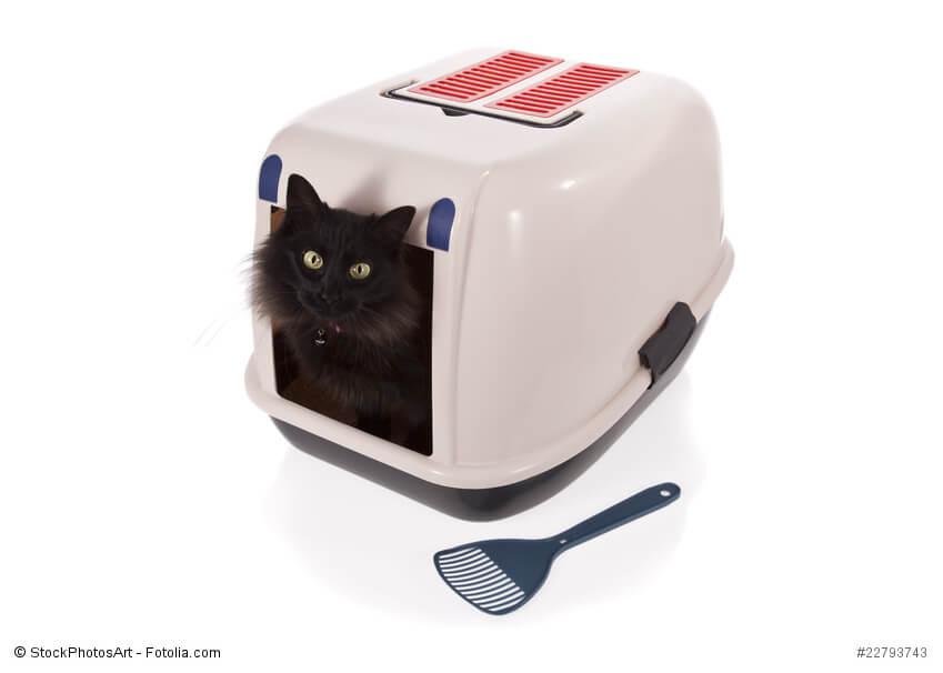 Schwarze Katze auf einem Katzenklo mit Deckel