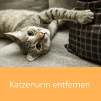 katzenurin-entfernen