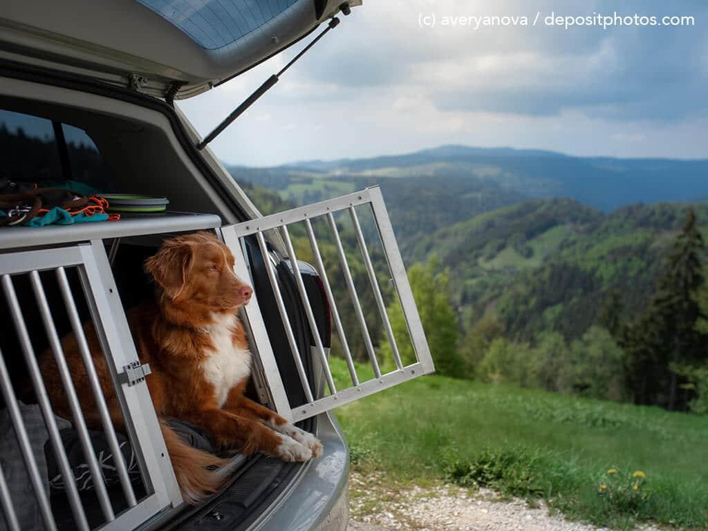 Hund liegt in einer Transportbox im Auto