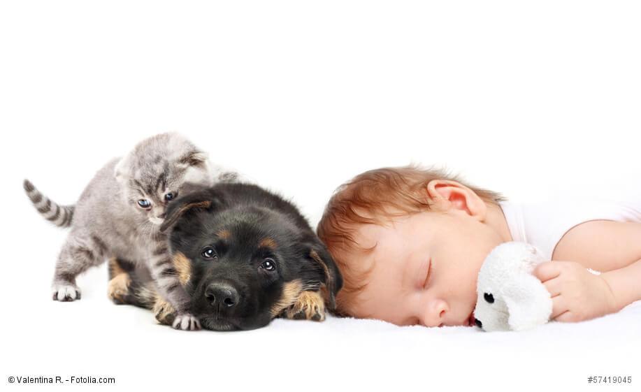 Ein schlafendes Baby mit einem Welpen und einem Kätzchen