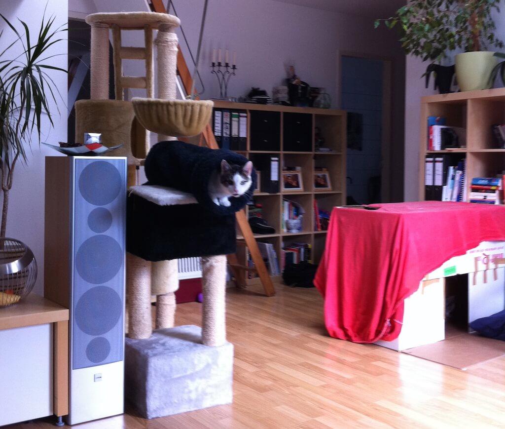 Ein Wohnzimmer mit Kratzbaum und Katzenkiste