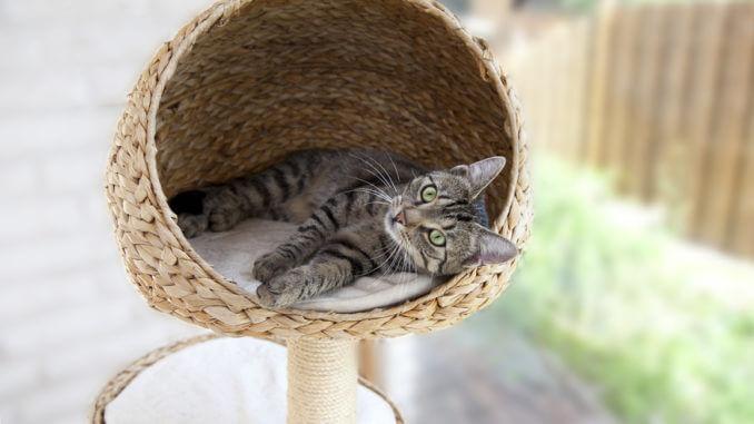 Katzenminze für den Kratzbaum