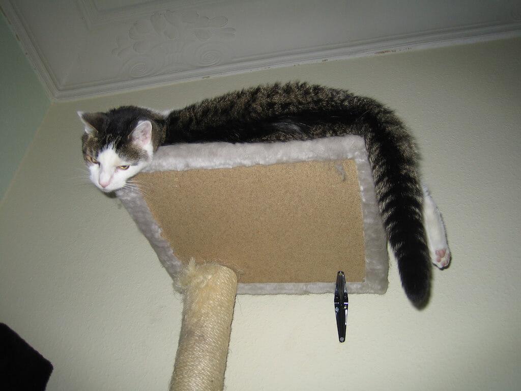 Eine Katze liegt auf dem obersten Brett eines Kratzbaumes und schaut nach unten.
