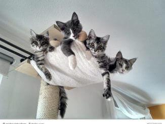 Kratzbaum mit einem Sack voll Katzen