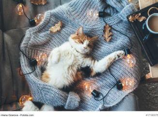 Herbst - Kuscheltipps für Katze und Mensch