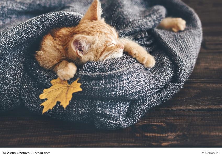 Beschäftigung im Herbst für Katzen
