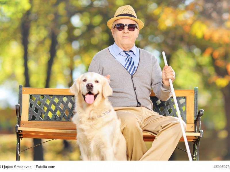Ein blinder älterer Mann sitzt auf einer Bank mit seinem Labrador Retriever neben sich, der auf Grund seines geduldigen und gelehrigen Wesens hervorragend als Blindenhund eignet.