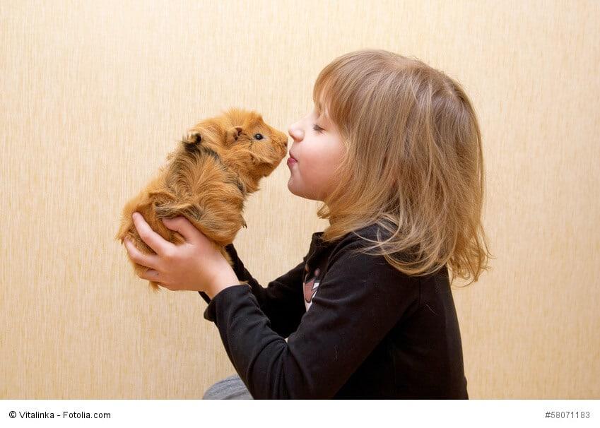 Kleines Mädchen küsst ein Meerschweinchen