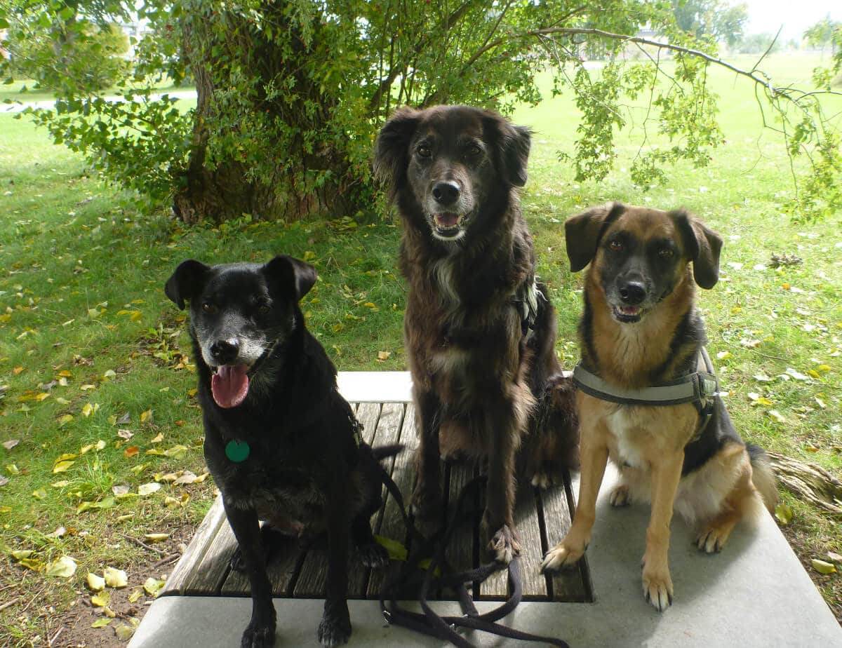 Drei Mischlingshunde sitzen nebeneinander auf einer Parkbank