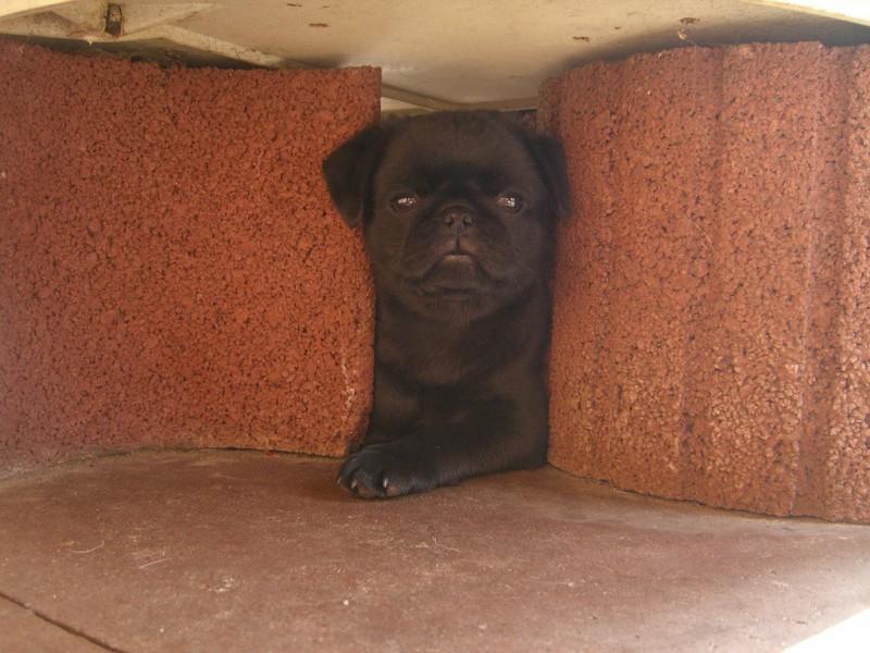 Bei allen schwarzen Hunden sollte man im Sommer auf genügend Schatten achten.