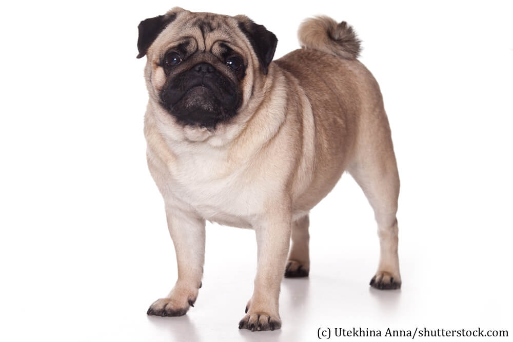 Popular Breeds Of Dogs With Pictures
