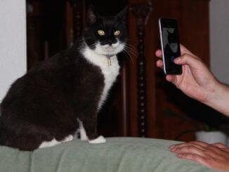 Foto von einer Hand mit Handy, das eine schwarzweiße Katze fotografiert, die auf einer Sofalehne sitzt.