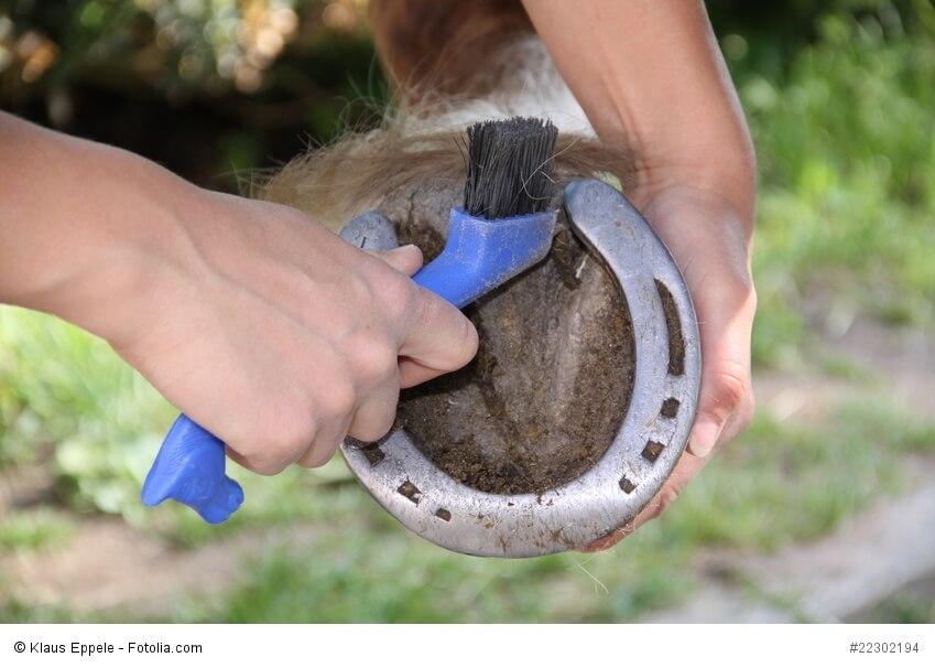 Reiterunfallversicherung gegen Schäden bei der Pferdepflege
