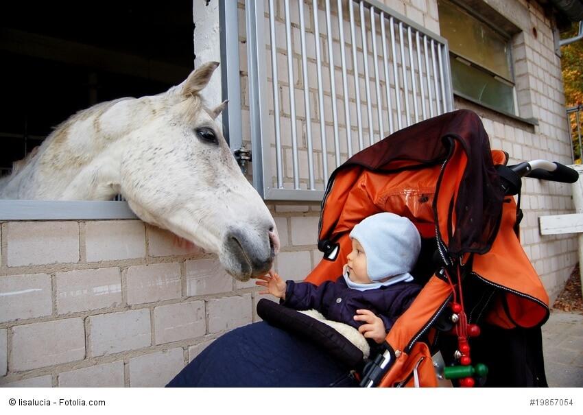 Eine entspannte Pferd/ Mensch Beziehung ist wichtig