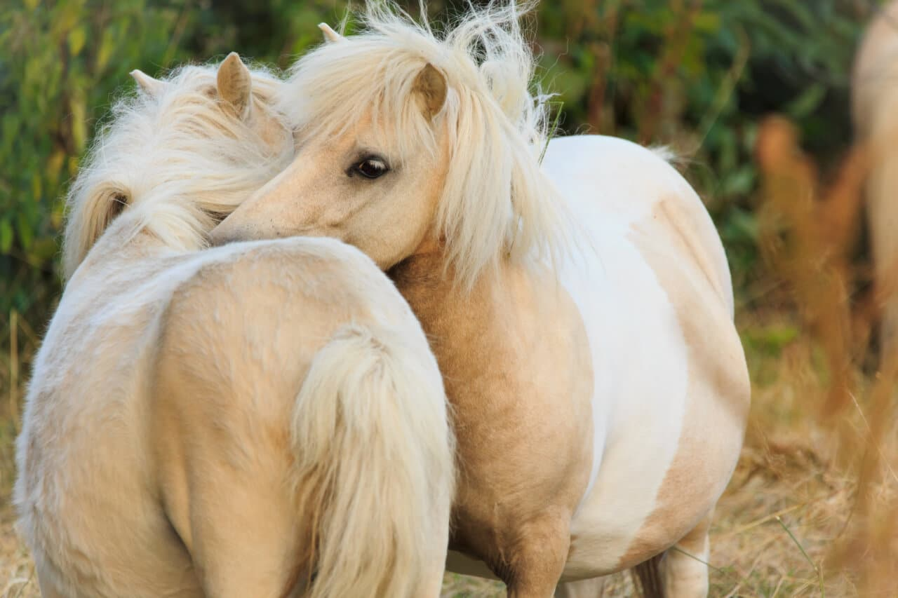 Natürliche Pflege bei Pferden