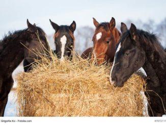 Pferdehaltung aber richtig