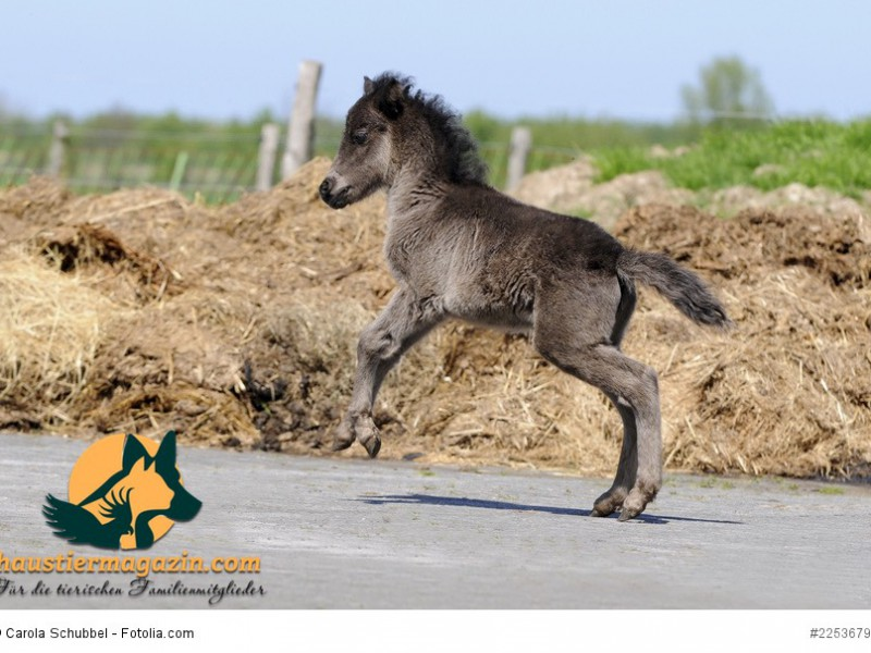 Springendes Pony
