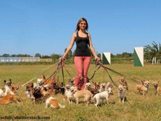 Junge Frau mit einem Rudel Hunden an diversen Leinen