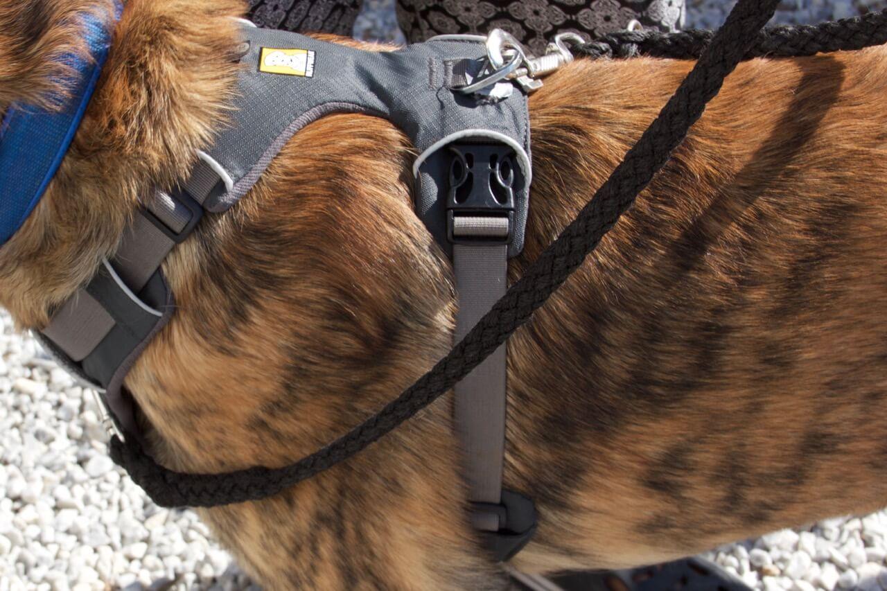 Ein Hund mit einem grauen Ruffwear Geschirr an dessen beiden Möglichkeiten eine Leine befestigt ist