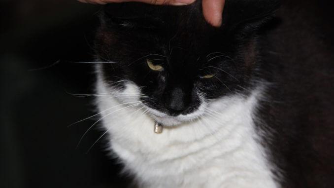Eine Katze genießt Streicheleinheiten