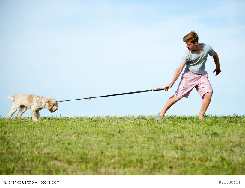 Hund an Leine will nicht mit