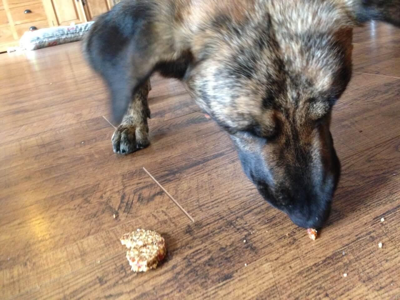 Ein Hund frisst einen Hundekeks
