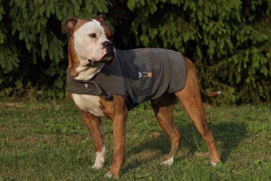 Ein Hund mit einem grauen Thundershirt