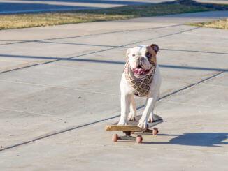 Hund auf einem Skateboard