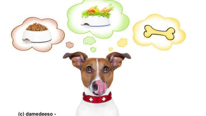 Ist vegane Hundeernährung überhaupt möglich?