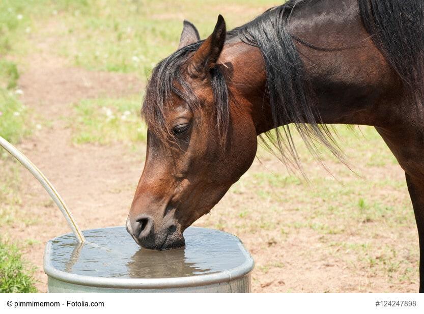 Ein dunkler Araber trinkt an einem heißen Sommertag Wasser aus einem Trog
