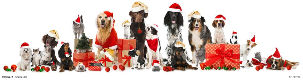 Fröhliche Weihnachten an alle menschlichen und tierischen Familienmitglieder!