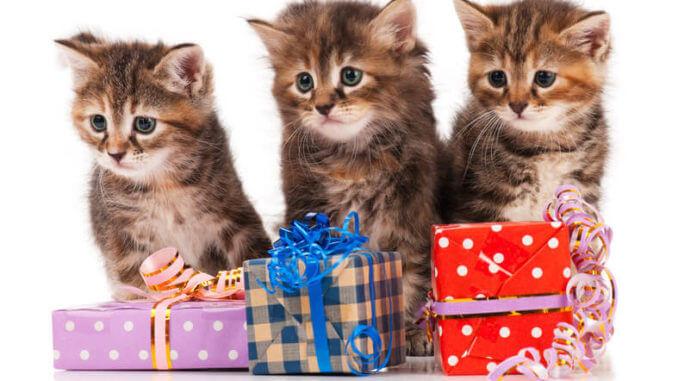 Drei Kitten hinter drei Geschenken