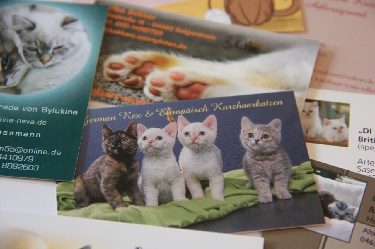Visitenkarten mit Züchtern von Europäisch Kurzhaar